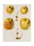 Several Views of Yellow Apple Kunstdrucke