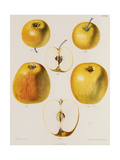 Several Views of Yellow Apple Premium Giclee Print