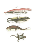 Lizard Scientific Illustrations Kunstdrucke