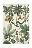 Multiple Botanical Drawings of Leaves and Seeds Kunstdrucke