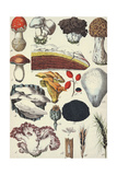 Mushrooms and Other Fungi Kunst