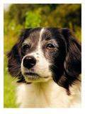 Lovely Dog Pet Animal Reproduction procédé giclée par  Wonderful Dream