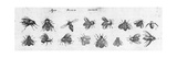 Black and White Bee Illustrations Plakat