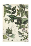 Stems of Leaves with Clusters of Seeds and Pods Posters