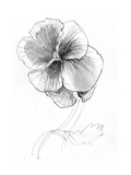 Sketchy Pencil Drawing of Pansy Flower Art