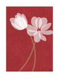Pair of Translucent White Flowers on Red Background Prints