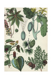 Botanical Plants and Seed Pods Poster