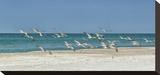 Beach Skimmers Impressão em tela esticada por Mary Lou Johnson