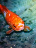 Fish Sealife With Stars Affiches par  Wonderful Dream