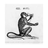 Stylized Monkey Drinking from Chalice Illustration Láminas