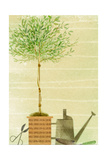 Topiary Tree in Pot Beside Watering Can Print