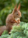 Animal Squirrel Nature Lámina por  Wonderful Dream