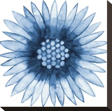 Blue Daisy Stretched Canvas Print by Cathe Hendrick