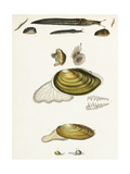 Slugs and Clam Shell Scientific Illustrations Posters
