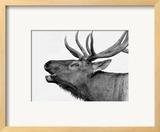 Deer Print by  PhotoINC