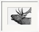 Deer Prints by  PhotoINC