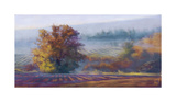 Vineyard Mist Giclee Print by Amanda Houston