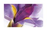 Iris Rising Gicléetryck av Harold Davis