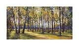 Forest Shade Giclee Print by Amanda Houston