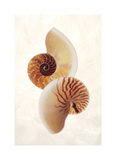 Nautilus Giclee Print by Glen and Gayle Wans