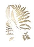 Gold Foil Ferns II Poster par  Vision Studio