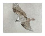 Searching Osprey Posters par Todd Telander
