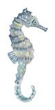 Pretty Seahorse Kunstdrucke von Sandra Jacobs