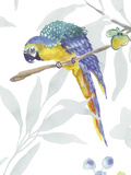 Colourful Parrot Stampa giclée di Sandra Jacobs