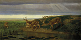 Deer on the Prairie, 1884 Giclee Print by William Holbrook Beard