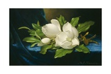 Giant Magnolias on a Blue Velvet Cloth, 1890 Giclee Print by Martin Johnson Heade