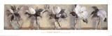 Magnolias Posters by Carmen Galofre