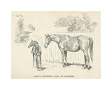 Friar's Daughter - Foal by Blenheim Giclée-Premiumdruck von Lionel Edwards