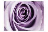 Lavender Bloom Posters af Tracey Telik