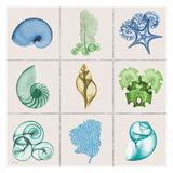 Sealife 9 Patch Kunst af Albert Koetsier