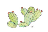 Prickly Affiche par Beverly Dyer