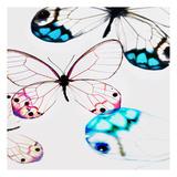 Glasswings Prints by Tracey Telik