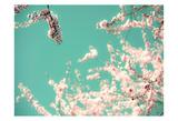 Apple Sky Affiches par Tracey Telik