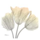 Sunday Morning Tulips Kunst af Albert Koetsier