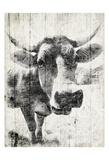 Vintage Cow Mate Pósters por Jace Grey