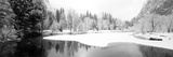 Snow Covered Trees in a Forest, Yosemite National Park, California, USA Fotografie-Druck von  Panoramic Images