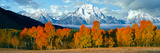 Trees in a Forest with Snowcapped Mountain Range in the Background, Teton Range, Oxbow Bend Fotografisk trykk