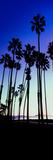 Palm Trees Silhouette at Sunrise, Santa Barbara, California, USA Fotografisk tryk af Panoramic Images,