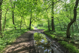 Trees in Spring Leaf Provide Canopy over Hiking Path with Puddle Reflections, Millers Dale Photographic Print by Eleanor Scriven