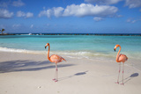 Flamingos on Flamingo Beach, Renaissance Island, Oranjestad, Aruba, Lesser Antilles Photographic Print by Jane Sweeney
