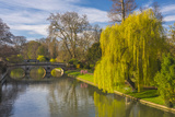The Backs, River Cam, Cambridge, Cambridgeshire, England, United Kingdom, Europe Photographic Print by Alan Copson