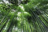 Arashiyama Bamboo Grove in Summer, Arashiyama, Western Kyoto, Japan, Asia Photographic Print by Eleanor Scriven