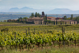 Idyllic Vineyard in La Rioja, Spain, Europe Impressão fotográfica por Martin Child
