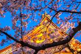 Sensi-Ji Temple in Tokyo at Night, Seen Through Cherry Blossom, Tokyo, Japan, Asia Impressão fotográfica por Martin Child