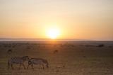 Kenya, Mara North Conservancy. Plains Game Graze in Morning Light, Mara North Conservancy Fotografie-Druck von Niels Van Gijn