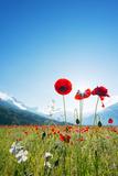 Europe, France, Haute Savoie, Rhone Alps, Poppy Field Fotoprint van Christian Kober